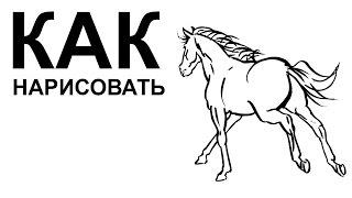 Рисунки про лошадей. KАК НАРИСОВАТЬ ЛОШАДЬ
