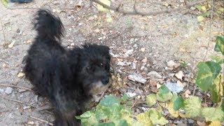 Ещё одного старого  пса выгнали на улицу, после смерти хозяйки