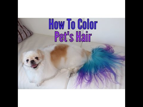 How to color dye your dog - YouTube