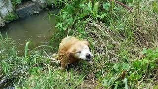 探検気分で十分体も冷えたので、満足したようで、川から自分で上がって...