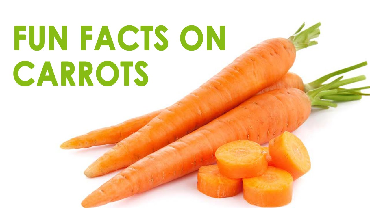 Fun Facts On Carrots Interesting Information About The