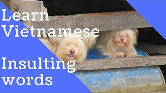 Learn Vietnamese: Insulting words