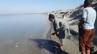 Shukat khan Catch big 16KG Rao Fish at indus River DIKHAN