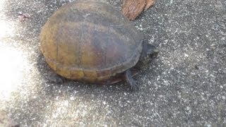 We Found A Pet Turtle!!! (8.2.13)