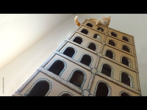 How to Make a 5 Floor Building for Cats