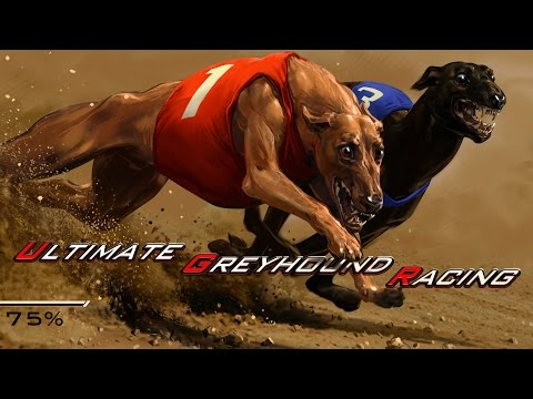 Greyhound Racing Single Player - Arcade Game - CasinoWebScripts