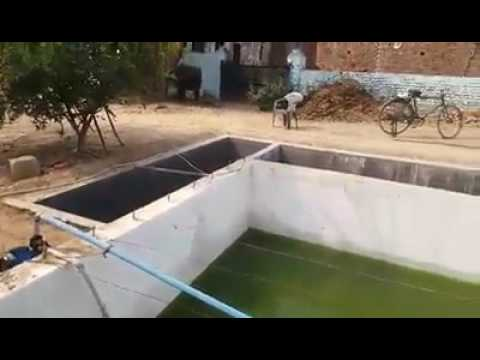 Pearl farming in tank culture kanpur