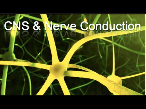 CNS and Nerve Conduction Animation - MADE EASY