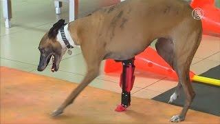Мексика: собаке создали новую лапу на 3D-принтере (новости)