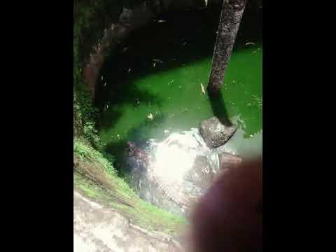 Crocodile de Madagascar
