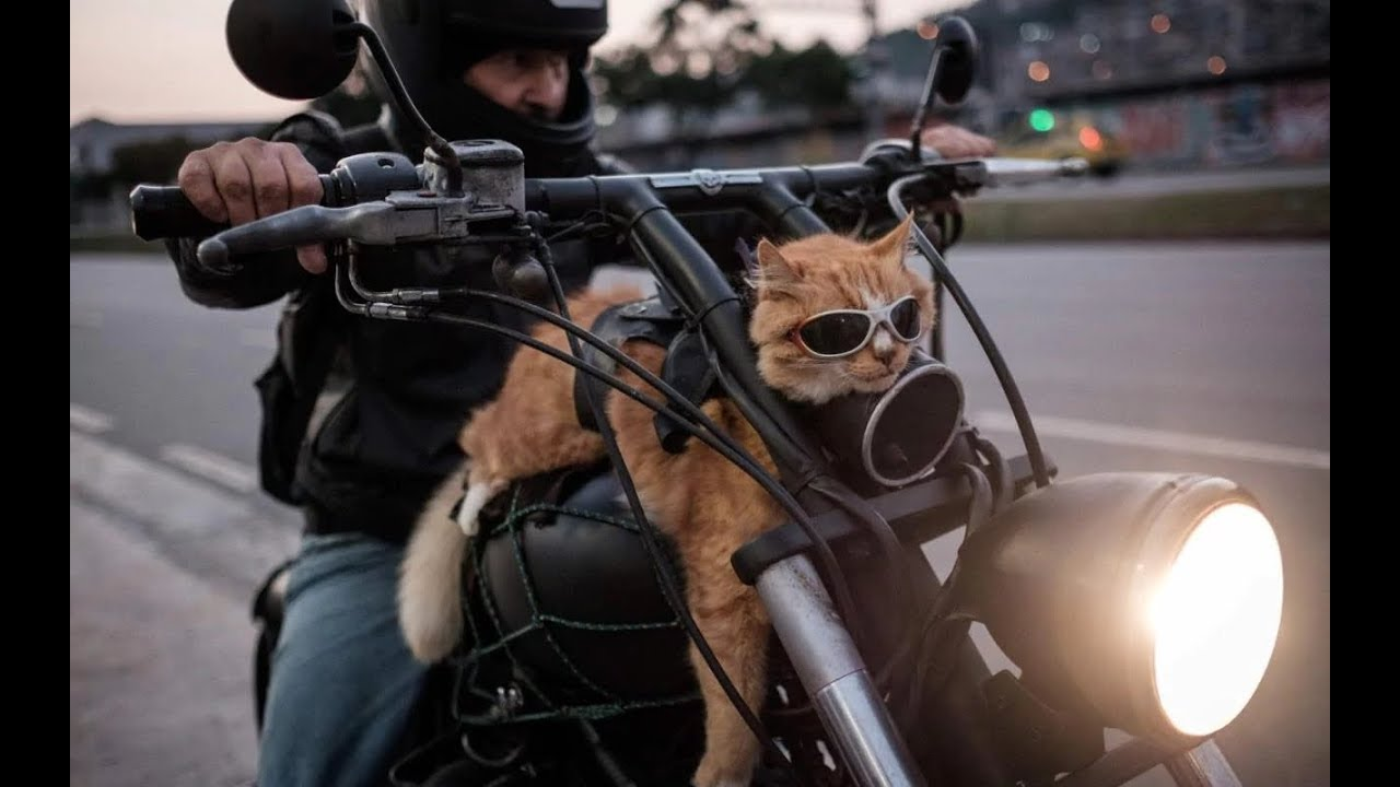 Кот для мотоцикла - YouTube