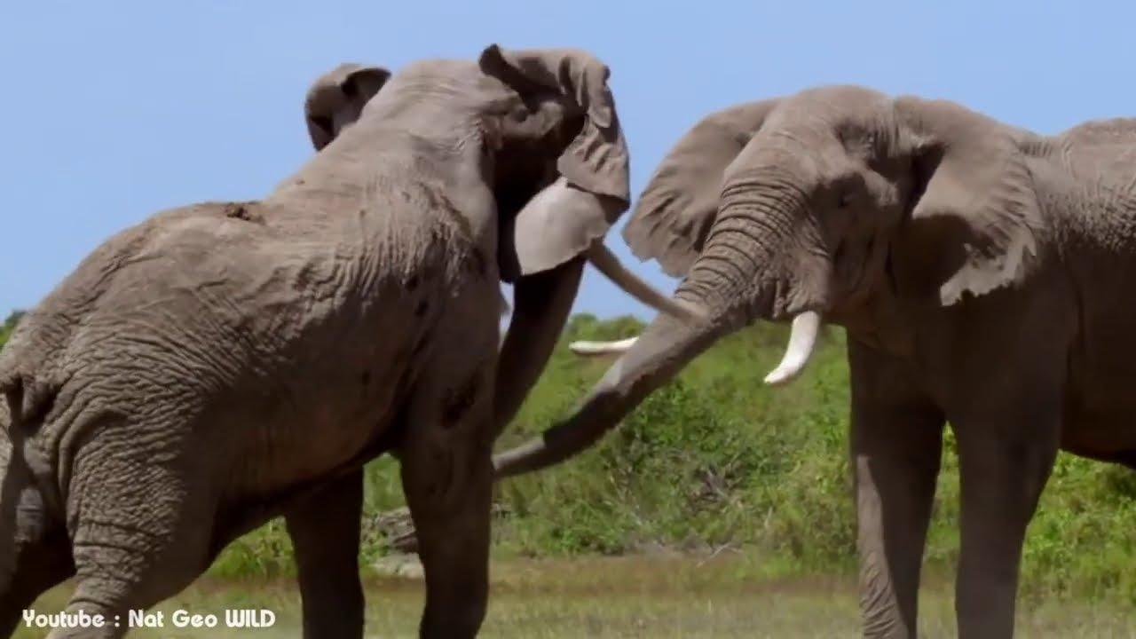 5 สัตว์ป่านักล่าเจ้าถิ่น ที่สัตว์อื่นต้องกลัวจนหัวหด!! (โหดสุดในผืนป่า)