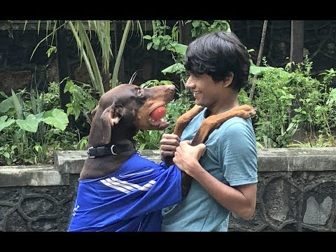 DOG SHORT FILM | BIG POCKET PART 2 || MOHAK MEET || SEEMA