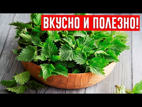 КРАПИВА - сильнейшее лекарственное растение от многих заболеваний!
