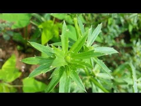 (Clip hay) khi quay cận cảnh thiên nhiên qua camera điện thoại beautiful nature ( đã mắt quá)