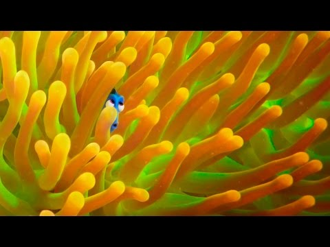 Thumbnail: Exclusive! A Brand New 'Finding Dory' Trailer