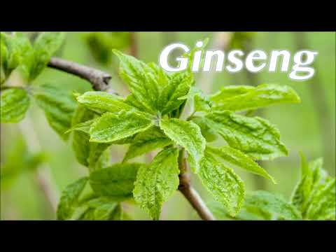 Ginseng properties and benefits