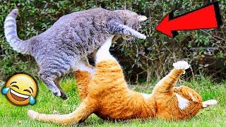 СМЕШНЫЕ ЖИВОТНЫЕ 2020 ПРИКОЛЫ КОТЫ СОБАКИ ЛУЧШИЕ ПРИКОЛЫ с Кошками и Собаками Funny Cats