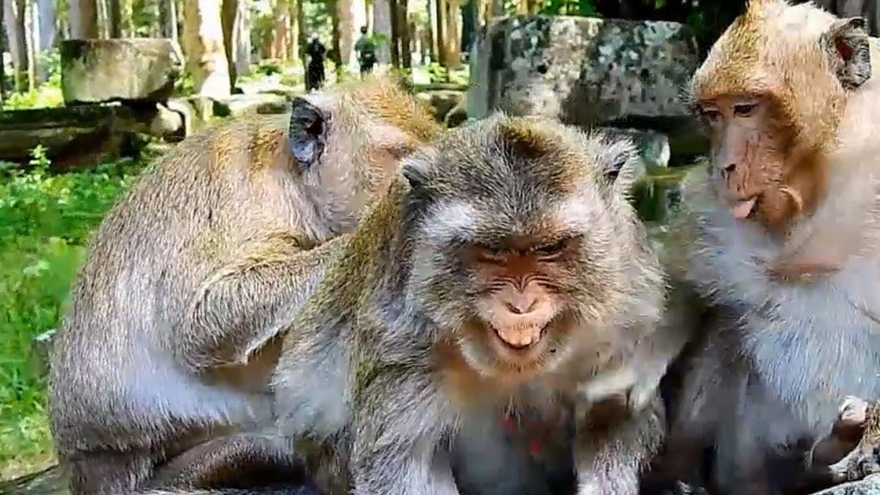 Cute Baby Monkey -  Monkey Videos compilation 2019 #26