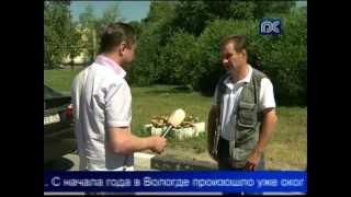 В Вологде участились случаи нападения собак на людей