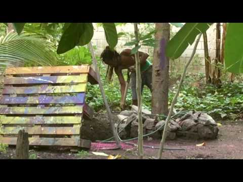 LIFE YARD : Urban Farming - Kingston Jamaica