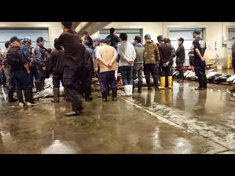 Osaka fish market tuna auction part 1