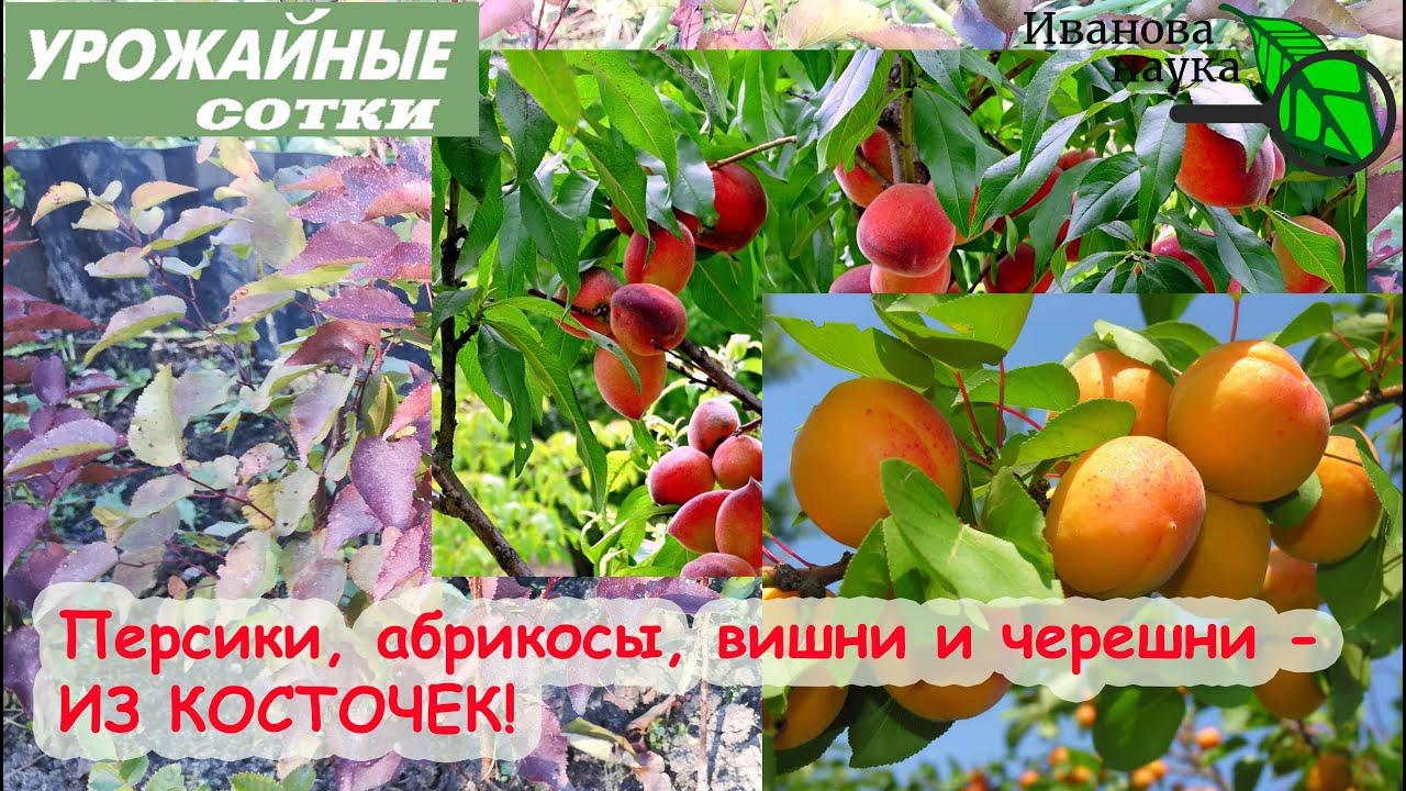22 ПЛОДОВЫХ растения, которые ДЕЙСТВИТЕЛЬНО СТОИТ выращивать из КОСТОЧЕК! Полный список в описании.