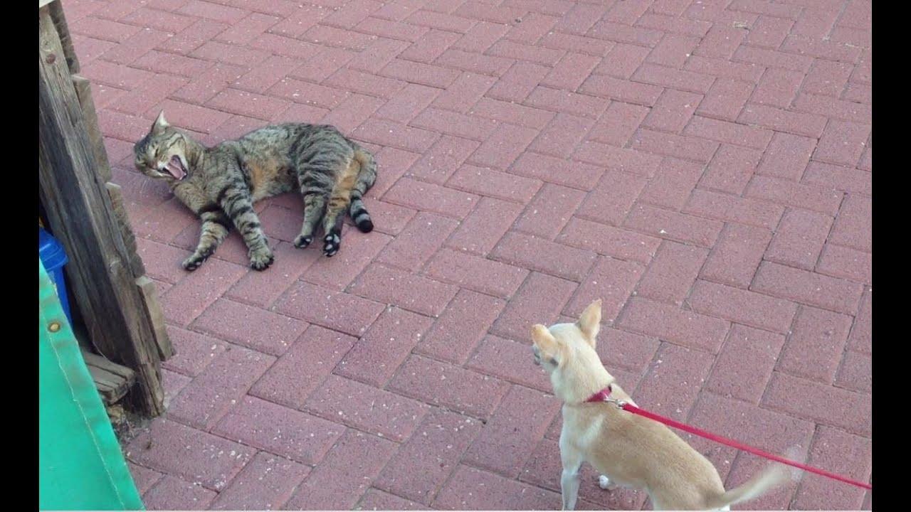 Make Dog Stop Barking At Cat