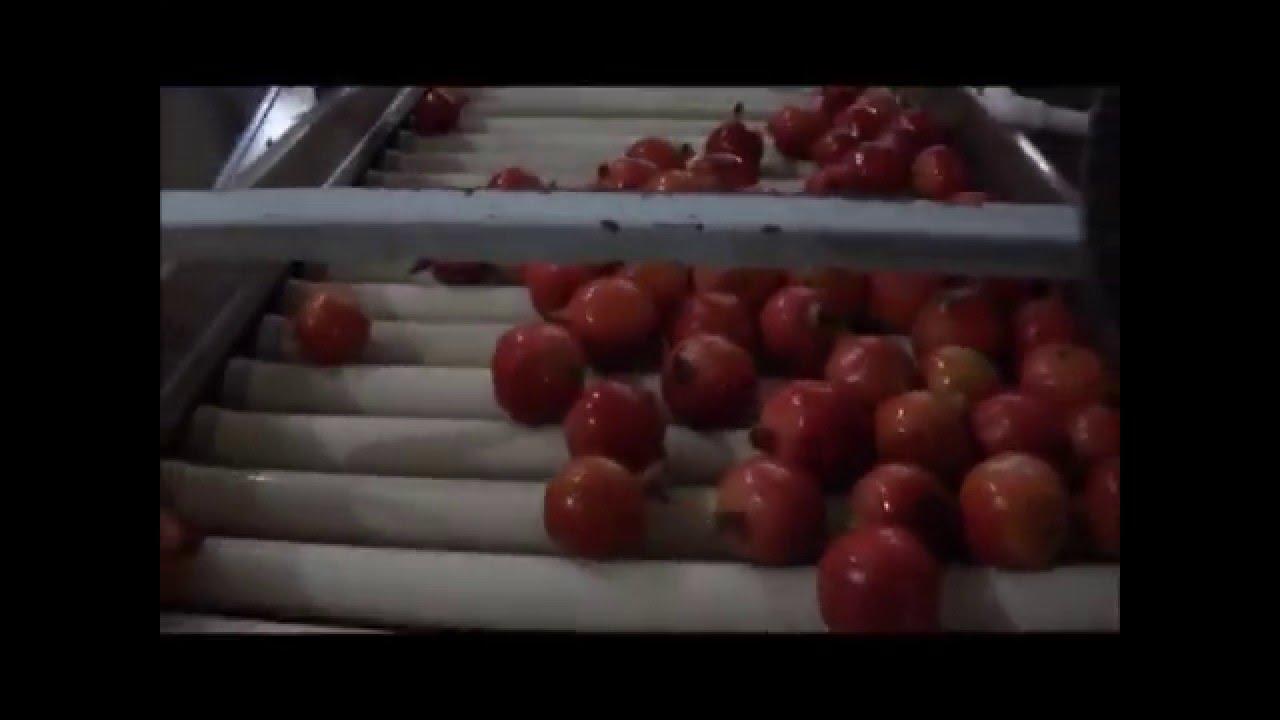 Cold Storage Manufacturers By Natural Vegetables & Fruits Storage Pvt   Ltd , Rajkot