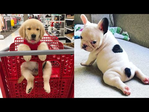 Baby Dogs – Cute and Funny Dog Videos Compilation #13 | Aww Animals