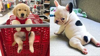 Baby Dogs - Cute and Funny Dog Videos Compilation #13 | Aww Animals