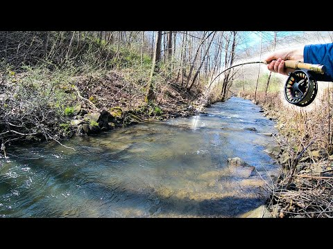 Creek Fishing For Trout (TIPS AND TRICKS)
