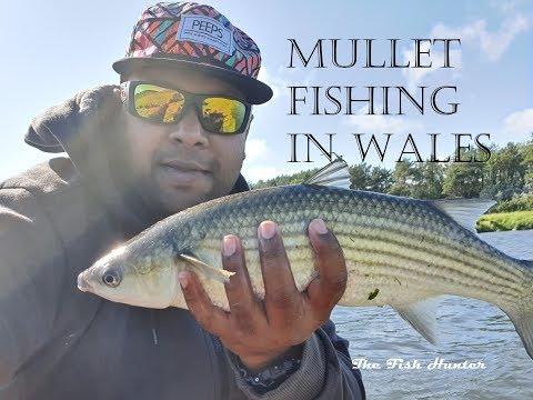 Mullet Fishing Ogmore River Wales.