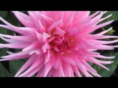 Олег Тихомиров - Осенние цветы