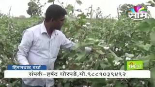 Success story of Harshad Ghorpade cotton farming
