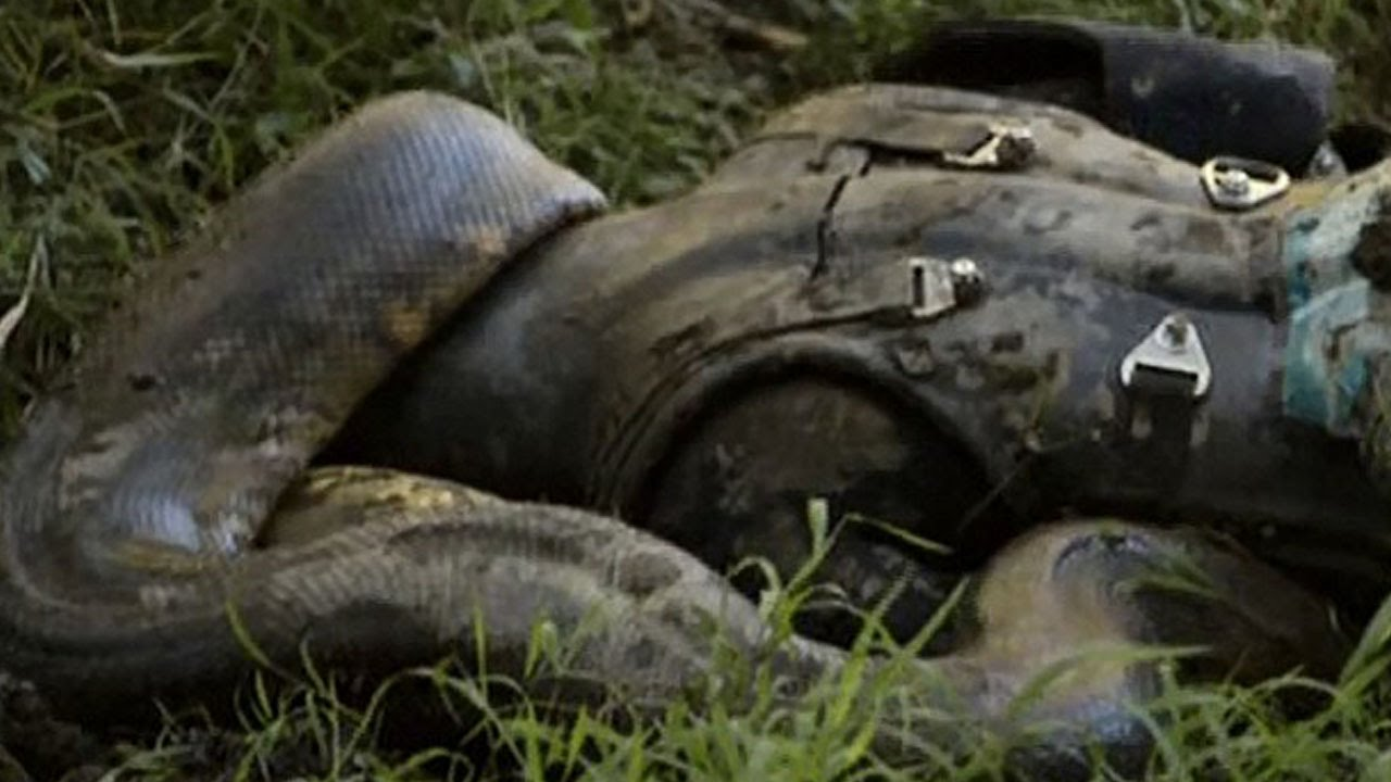 Man's Head Gets Eaten By A Snake- CAUGHT ON CAMERA - YouTube