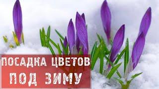 ФАЗЕНДА - 2013.11.17 - Фрагмент 51