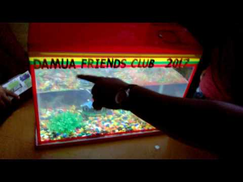 damua friends club ♣