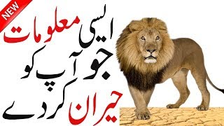 Facts About Lion | Interesting About Lion | Lion Facts | Animal Facts | wildlife | Hidden Secrets