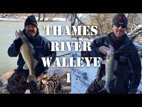 Thames River Walleye - Part 1