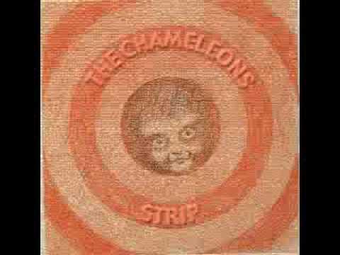 "The Chameleons- Strip- ""Here Today"""