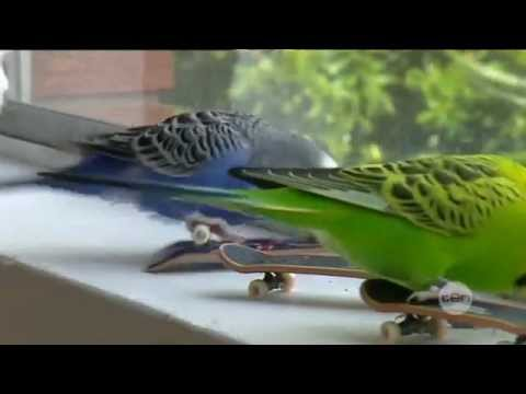 On this day | 5th March 2008 | Skater budgies