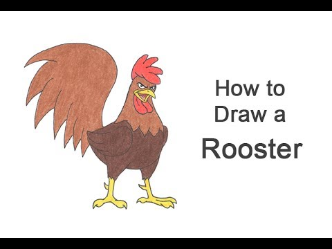 How to Draw a Rooster (Cartoon) - YouTube