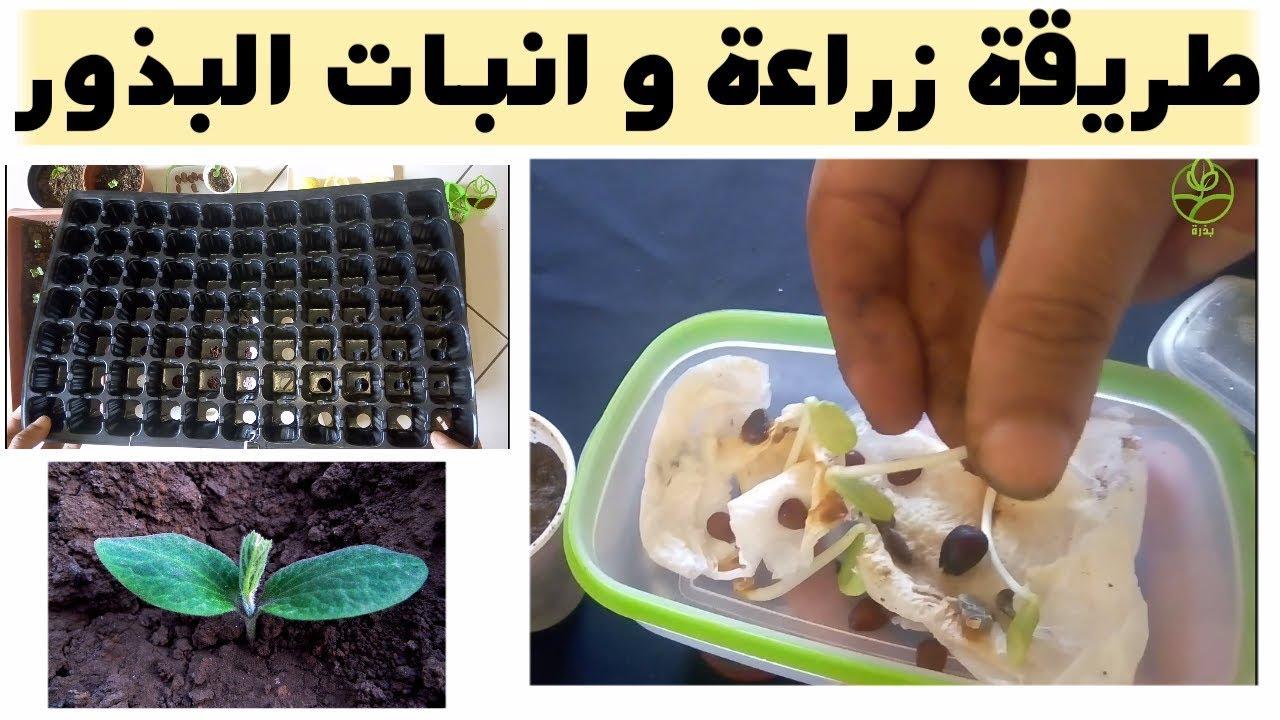 زراعة البذور و تسريع الانبات بطريقة سهلة Youtube