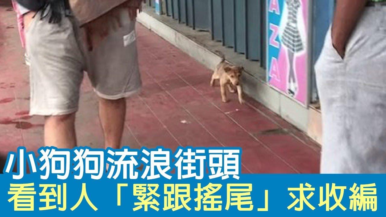小狗狗曾經流浪街頭…看到人緊跟搖尾求收編 經過兩年後「意外訪客」:謝謝泥當初救了我~