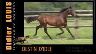 Destin D'Idef - M.  2014