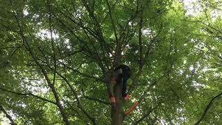 Rencontres Régionales d'Arboriculture Nord-Est 2019