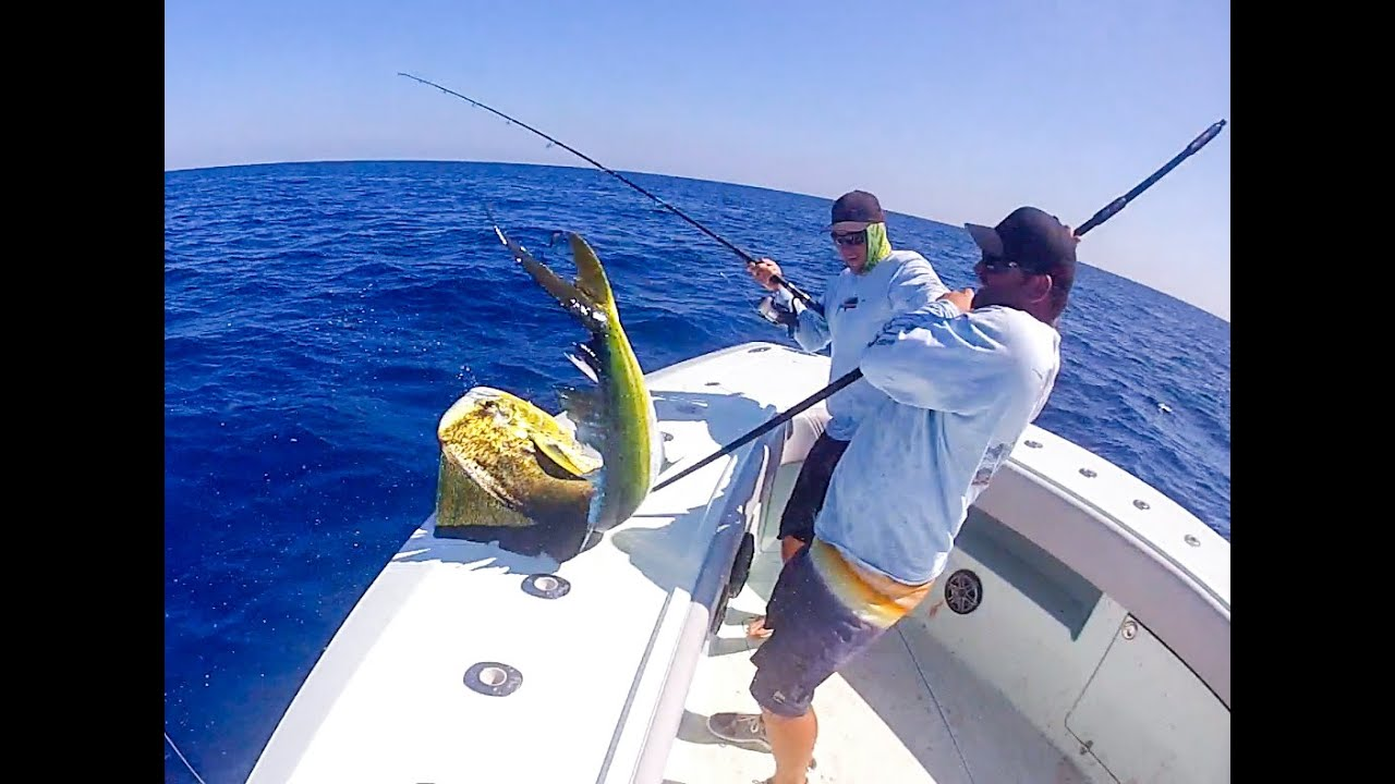 Epic bahamas mahi fishing youtube for Bahamas fishing license