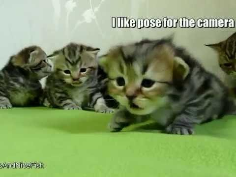 Smallest Cute Kittens Compilation 2016