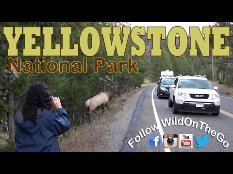 Yellowstone National Park - Wildlife and Geothermal Activity - Full Time RV Travel